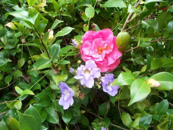 Unknown variety near the back garden gate.