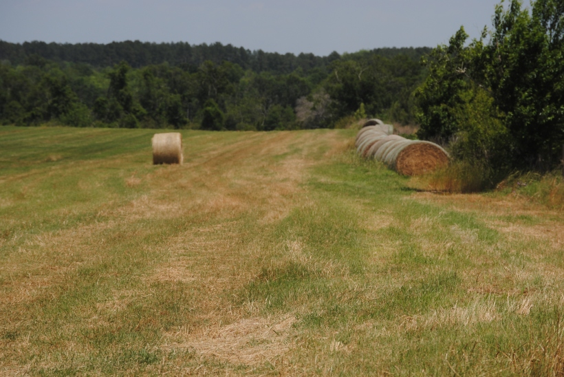 Rolled hay and a background of green trees.
