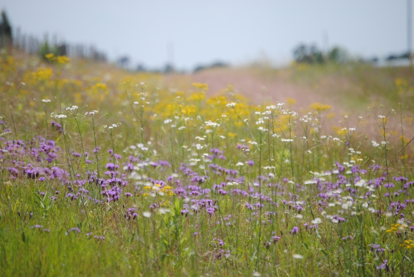 Colorful roadside weeds in Georgia.